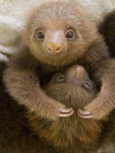 Sloth love◇
