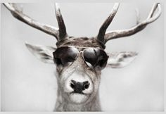 Cute babies, magical pee, and badass cold tolerance? This year, bring up reindeer facts during family Christmas dinner. Reindeer Facts, Funny Animals, Cute Animals, 8 Facts, Cute Glasses, Wearing Glasses, Wayfarer Sunglasses, Last Minute Gifts, Nature Animals