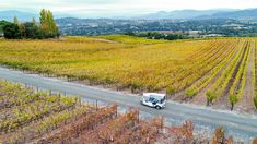 Brand-new Wine Country tour company Laces and Limos has arrived on the scene Instagram-ready with its fleet of open-air tuk-tuks—think chic, modern-day versions of the rickshaw that also happen to be 100 percent electric.