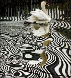 There's always something behind the black and white, if you bother to scratch the surface. Ania Nowicki  PSYCHEDELIC swan dance (by adrians_art)]