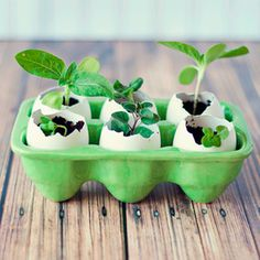 Recycle eggshells by making these Eggshell Seed Starters from in Three. They're a super easy way to get that garden growing, plus the eggshells act as fertilizer! Organic Gardening, Gardening Tips, Egg Shell Planters, Seed Planter, Garden Deco, Kids Learning Activities, Nature Activities, Planting Vegetables, Planting Seeds