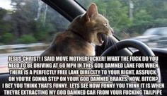 Road Rage - LOLcats is the best place to find and submit funny cat memes and other silly cat materials to share with the world. We find the funny cats that make you LOL so that you don't have to. Funny Animal Pictures, Funny Animals, Adorable Animals, Animal Pics, Funny Photos, Funny Cute, Hilarious, Assurance Auto, Angry Cat