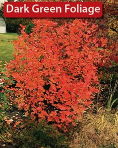 15 Best Sarah Images Plants Shrubs Garden