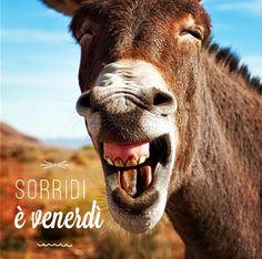 Sorridi è venerdì: 3x2 su www.legnogram.com