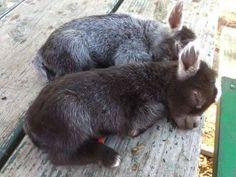 Sleeping Baby Donkeys