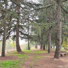 Oggi così con la voglia di quiete e penso a #TenutaAdriana al parco dei Laghi Terre Rosse dove tra bosco e pineta non è difficile trovare il luogo per rilassarsi. Oggi ho voglia di natura! #Biella #ExploreBiella #Piemonte #innamoratidelbiellese