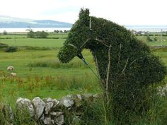 Hawthorn horse  topiary - Wigtown Bay, Scotland