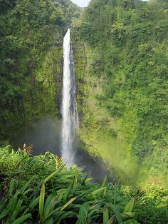 hawaii forests
