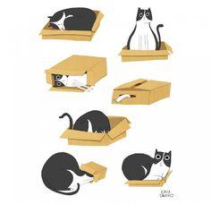 El gato y la caja. - Las preposiciones
