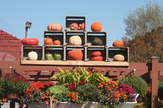 Maybe not a display for your front porch, but nevertheless a lovely fall display at Hyannis Country Gardens.