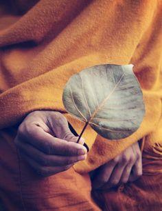 A leaf of Bodhi Tree in Monk's hand, Buddhagaya, Bihar.