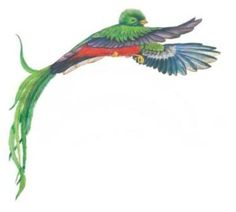 quetzal drawing - Google Search