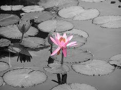 fotods en blanco y negro con un toque de color | Decorar tu casa es facilisimo.com