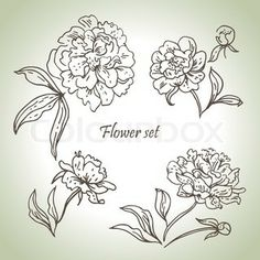 Vector of 'Floral set Hand drawn illustrations of peonies'