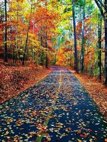 Mother nature photography autumn leaves 42 Ideas for 2019 Beautiful World, Beautiful Places, Beautiful Pictures, Autumn Scenes, Fall Pictures, Nature Pictures, Beautiful Landscapes, Parks, Nature Photography