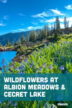 Wildflowers at Albion Meadows & Cecret Lake | UTAWESOME Stuff To Do, Things To Do, Salt Lake County, Bull Moose, Utah Hikes, The Far Side, Getting Up Early, Wildflowers, To Go