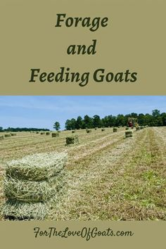 In this episode, ruminant nutritionist Laura Marie Kramer, Director of National Accounts for Standlee Premium Western Forage, talks about alfalfa and grass hay, as well as the difference between pellets and long-stemmed forage. Breeding Goats, Nigerian Dwarf Goats, Raising Goats, Homestead Farm, Baby Goats, Small Farm, This Or That Questions