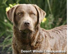 Desert Winds Chessies