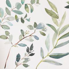 I just love the colour of eucalyptus leaves dont you? Plant Illustration, Botanical Illustration, Watercolor Illustration, Watercolor Design, Watercolor Print, Watercolor Paintings, Watercolor Leaves, Watercolor Background, Eucalyptus Leaves