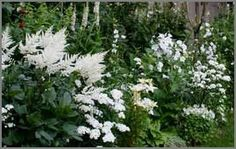 GARDEN: White - Make a Moon Garden: White flower inspirations. Beautiful Moon, Beautiful Gardens, White Plants, White Gardens, Garden Cottage, Shade Garden, Garden Plants, Garden Styles, Dream Garden