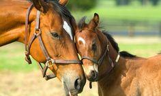 Cómo detectar una enfermedad dental en el caballo - http://www.noticaballos.com/detectar-una-enfermedad-dental-caballo.html