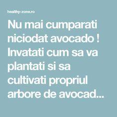 Nu mai cumparati niciodat avocado ! Invatati cum sa va plantati si sa cultivati propriul arbore de avocado cu fructe nelimitate ! - Healthy Zone