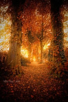 Follow the glow of autumn to a special place