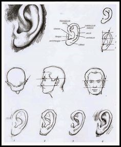 3D ART STREET ART MATERIAL ART FINE ART AND ALL: how to draw ear art