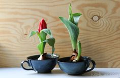 spring flower decoration: early bloomer, tulip in vintage pottery/ceramic cups // Frühlingsdekoration: Frühblüher, Tulpen in alten Keramiktassen