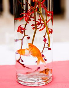 1000 ideas about goldfish centerpiece on pinterest fish for Fish centerpieces wedding receptions