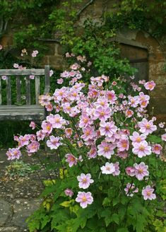 Gardening Autumn - Nice groundcover foliage in summer, gorgeous flowers in autumn pink japanese anemone - With the arrival of rains and falling temperatures autumn is a perfect opportunity to make new plantations Pink Garden, Shade Garden, Dream Garden, Tropical Garden, Back Gardens, Outdoor Gardens, Castle Gardens, Rustic Gardens, Beautiful Gardens