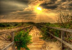 Walking in the Dunes by Dean Tunberg - Caught in The Wild life refuge of Back Bay in Virginia Beach.  Click on the image to enlarge.