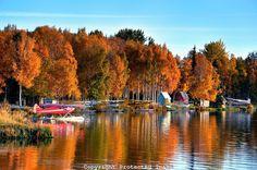 Fall colors provide a spectacular backdrop in Alaska's Lake Hood. Alaska Tours, Alaska Railroad, Eagle River, Fall Season, Good Times, Beautiful Homes, Backdrops, Autumn, Adventure