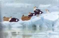 lars jonsson bird paintings - Google Search
