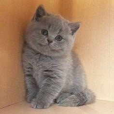 Un gatto peluche