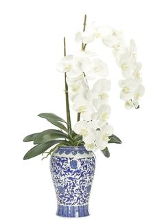 Orchid (WF559): Orchid Phalaenopsis, White, Blue and White Porcelain Vase | Preorder for September