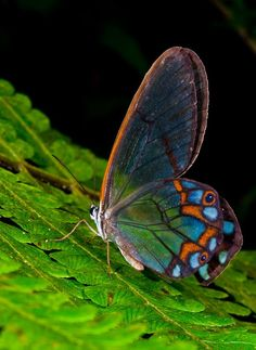 thanks to my SiSter for finding this!  MARIPOSAS DE ALAS TRANSPARENTES