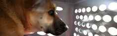 Dierenarts John Robb uit Connecticut is al 30 jaar erg begaan met het lot van dieren. Hij maakt zich vooral zorgen over het hondsdolheidvaccin.