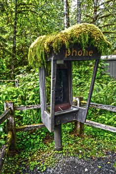 Hoh Rainforest - Washington State. This isn't my photo, but I have been by that phone before!