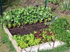 Potager en carré - carnet de bord | Plantule.org: un petit jardin en Touraine
