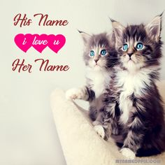 Write Lover Name Cute Cats Profile Image. Print His And Her Name Beautiful Cute Pictures. Boy And Girl Name Cats Photo Edit. BF or GF Name Sweet Cat Profile Pix. Online Create Couple Name Amazing Cute Pics. Best Two Text Name On Cutest Profile DP. Me And My Friend Name Latest Cute Profile. Unique Cutest Profile With Friends Name. Whatsapp And Facebook On Set Cute Profile. Download Anything Name Cute Wallpapers Download.