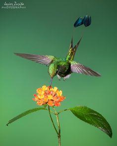 Nikon D500, Mindo Ecuador, Animal Action, Happy New Week, Beautiful Birds, Instagram, Photography, Animals, Photograph