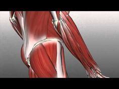 Forearm Muscles Part 2 - Posterior (Extensor) Compartment - Anatomy Tutorial