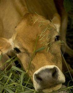 quiero colaborar en un rancho lechero