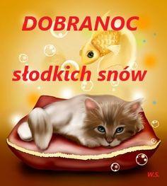 Good Morning, Snow, Cats, Polish, Buen Dia, Gatos, Bonjour, Cat, Kitty