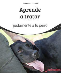 Aprende a tratar justamente a tu perro Un perro aunque sea mejor que muchas personas, no lo e. Por eso hay que aprender a tratar justamente a tu perro. #tratos #aprender #miperro #adiestramiento