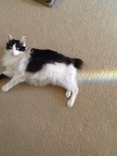 Cat Was Sitting In The Right Place At The Right Time.