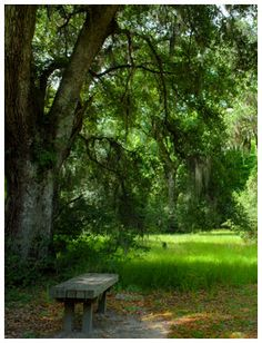 Image of a bench under a tree at Caw Caw Interpretive Center, Charleston County, birding, history, boardwalks through wetlands, environmental education programs.