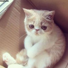 Awww cute baby animals, animals and pets, funny animals, funny cats, animal Cute Baby Animals, Animals And Pets, Funny Animals, Animal Memes, Cute Kittens, Beautiful Cats, Animals Beautiful, Sad Cat, Sad Kitty