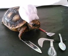 Oh my gosh! Where has this little chef turtle been all my life!?!?!?!?